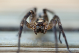 araignée en grand