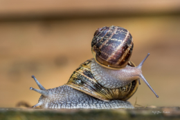 deux escargot