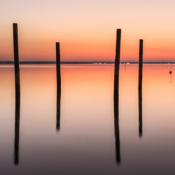 4 pignots, dans l'eau, pose longue, bassin arcachon, krystyne ramon