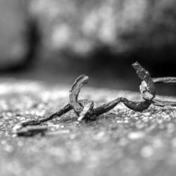 anneau de chaine cassé rouillé