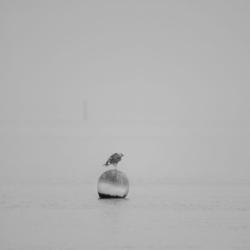 mouette posée sur corp mort, N&B, brouillard, bassin arcachon, krystyne ramon