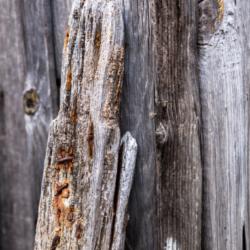 planche de bois usée 1